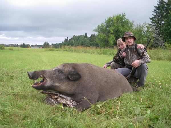 Chasse au sanglier en estonie venez chasser les sangliers - Cuisiner du sanglier au four ...